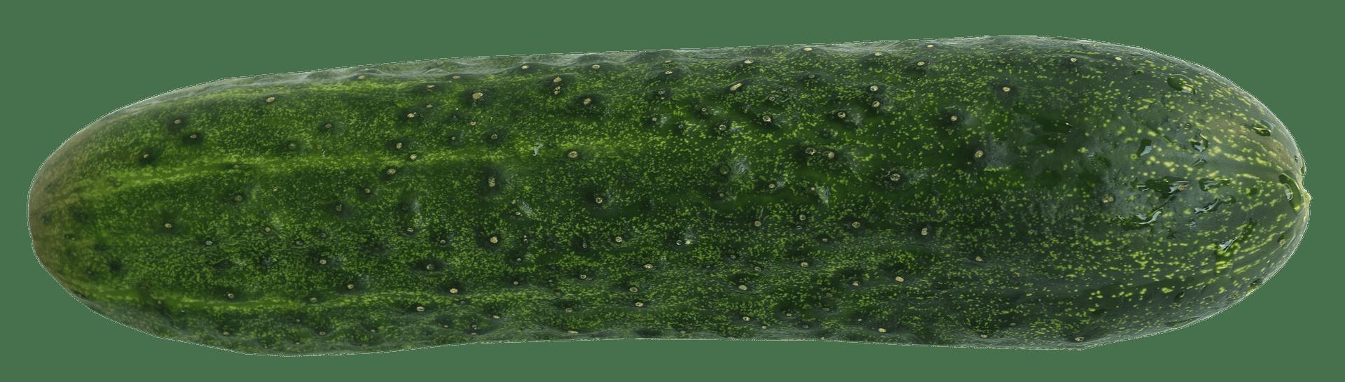 cucumber-2488875_1920